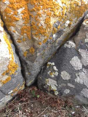 Lichen on a rock at Fort Ross, California